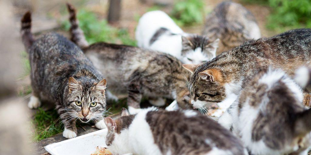 kissapopulaatio, monta kissaa, ei hyvä
